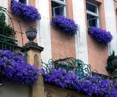 image: Rośliny za oknem...
