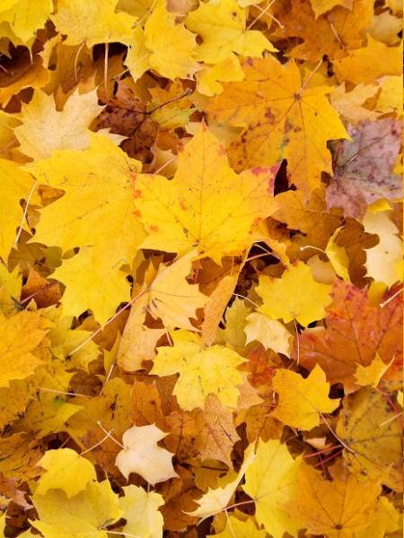 image: Ozdobność drzew w czterech porach roku...