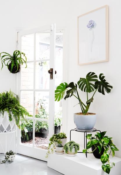 image: Roślinne MUST HAVE w trendach wnętrzarskich...