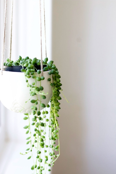 Plantsandwhitedecor1_3hwyww.jpg