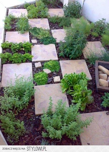image: Pierwsze kroki młodego ogrodnika do założenia warzywnika...