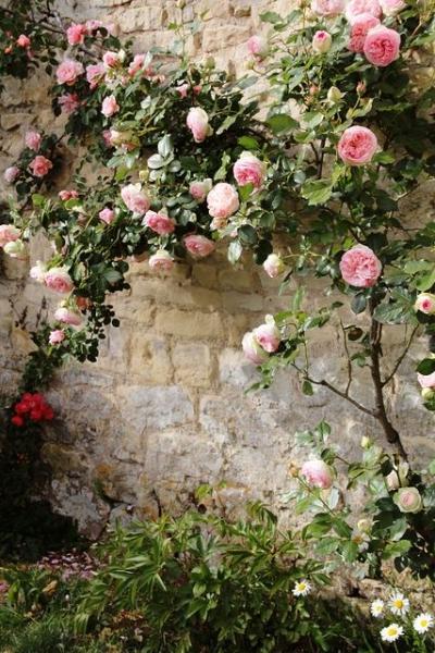 image: Pani Róża...