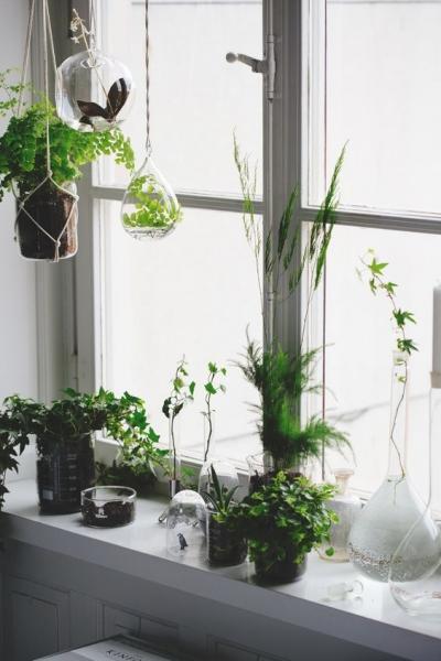 image: Zaproś ogród do domu...