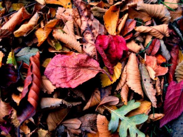 image: Jesień w ogródkach...