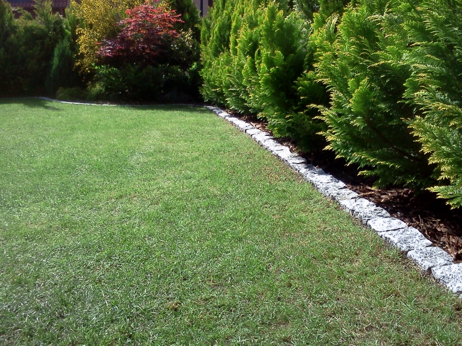 image: Jak założyć i utrzymać piękny trawnik...