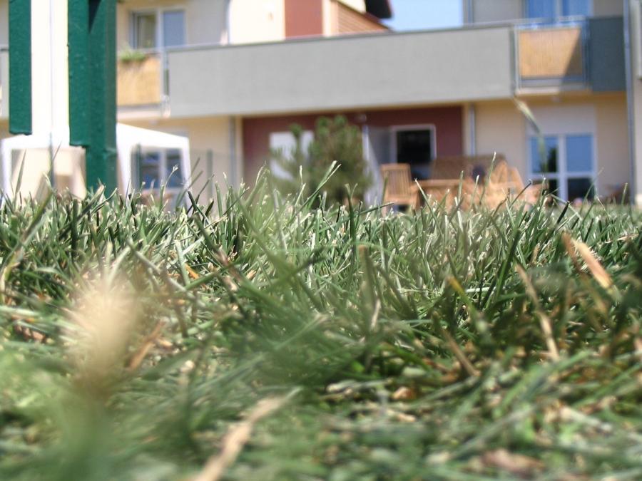 image: Zakładanie trawnika z rolki...